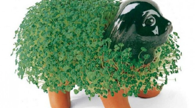 Of Chia Pets And Used Underwear